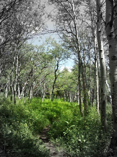 The Coonsa Creek Trail