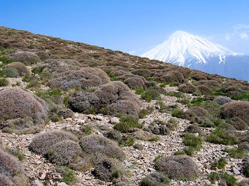 View of Damavand
