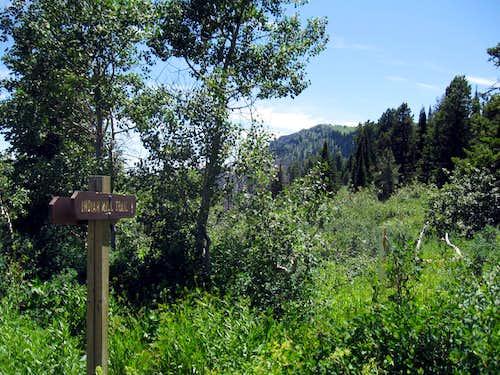 Elkhorn Peak hike