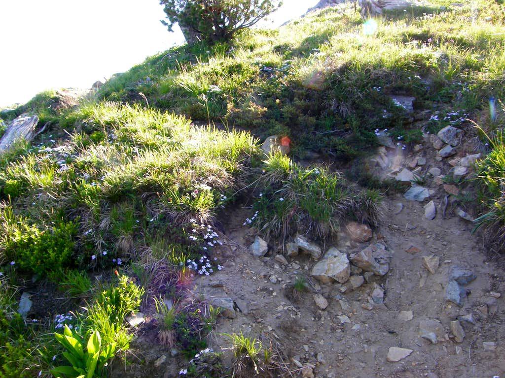 Crystal Peak boot path.