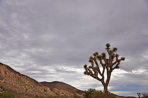 A cloudy day in Joshua Tree