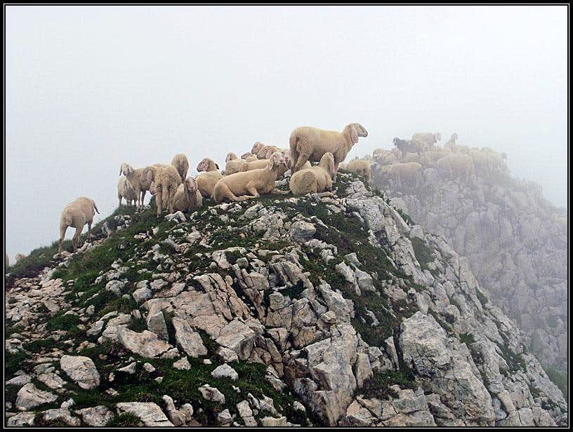 On Monte Baldo ridge