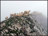 On Monte Baldo ridge
