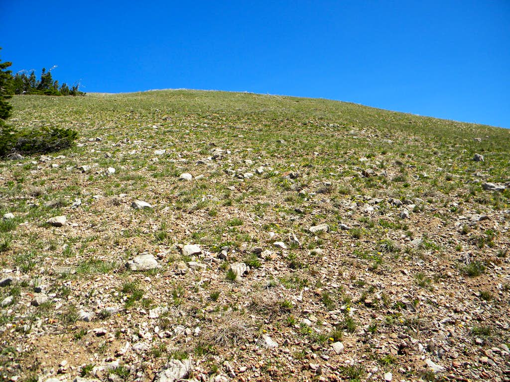 South Slope of Ridge Point 9,800