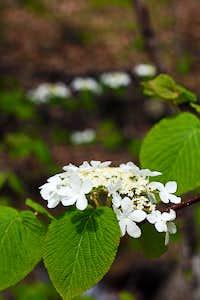 Flowers on Tecumseh