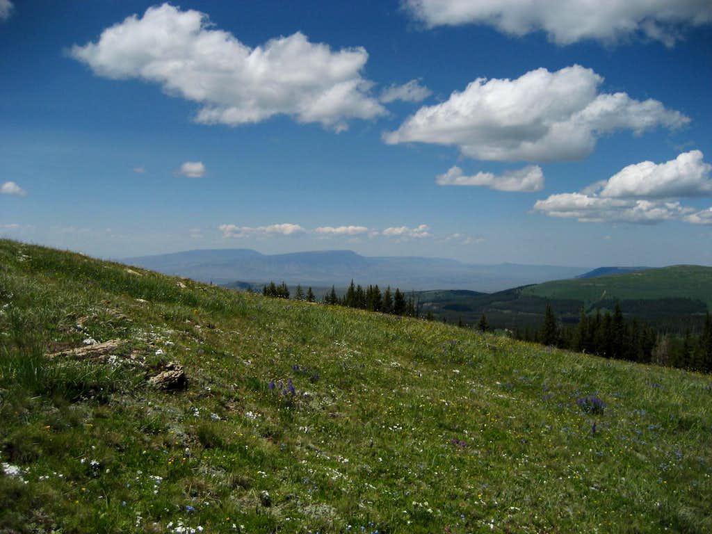 Pryor Mountain