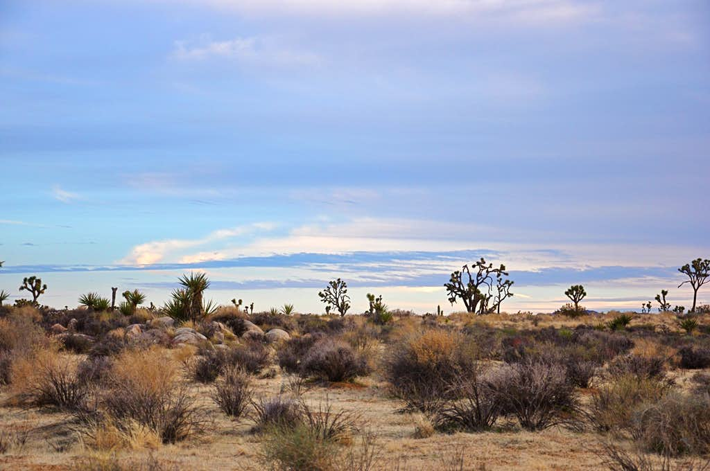 Views of Joshua Tree National Park