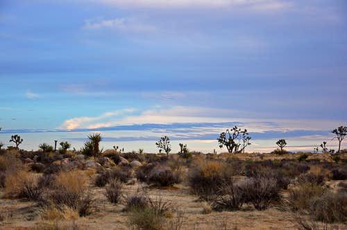 Views of Joshua Tree National Park