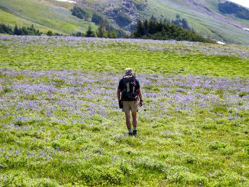 Flower Fields on Upper Slopes of Banshee