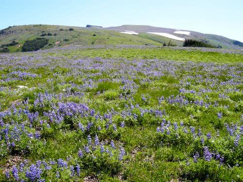 Flower Fields to Summit