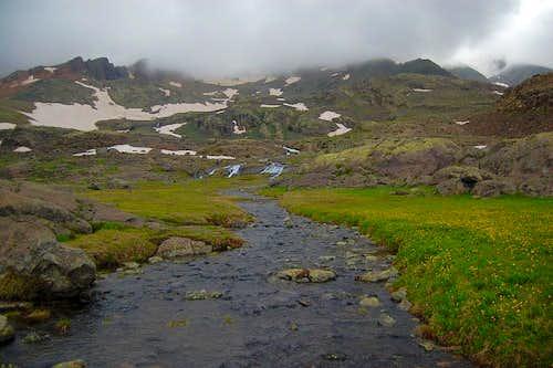 Creek and Wildflowers
