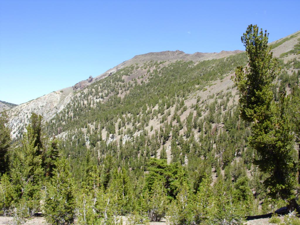 Church Peak from the Mount Rose Trail