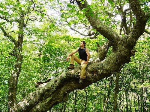 The Jebus Tree