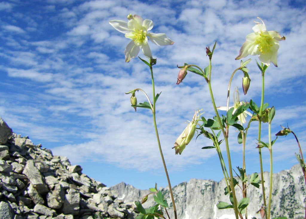 Columbines and South Thunder
