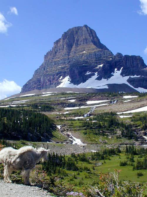 Mt Clements + goat