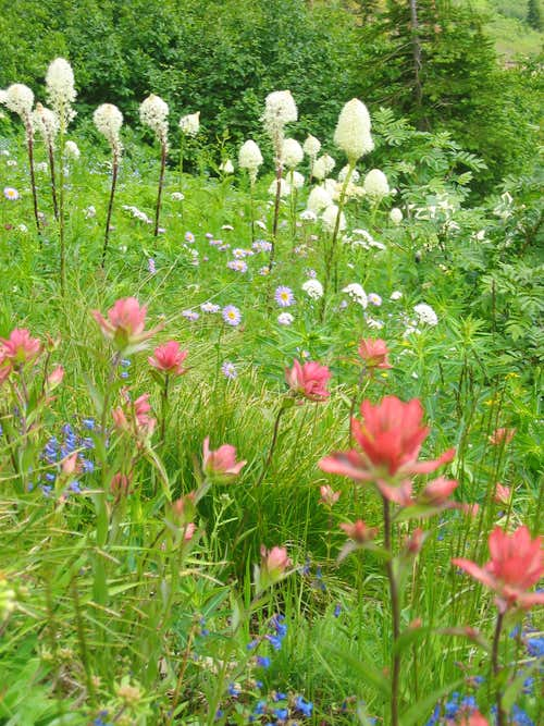 beargrass, indian paintbrush, etc