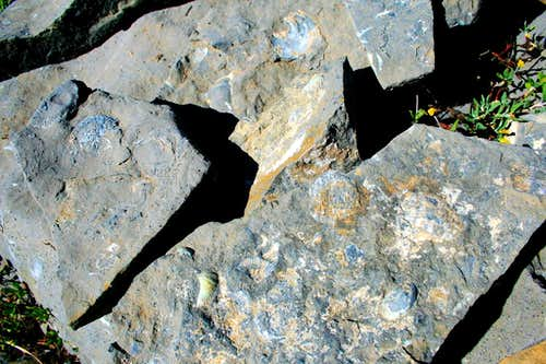 Fossils on Forgotten Peak\'s north east ridge.