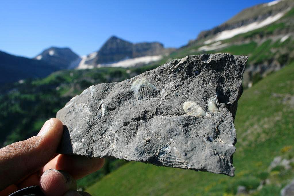 Fossils in the limestone, Forgotten Peak ridge.