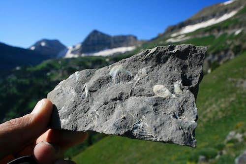 Fossils in the limestone, Forgotten Peak ridge.