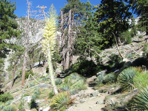 Along the Baldy Bowl trail