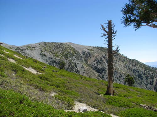 landscape on the Baldy Bowl Trail