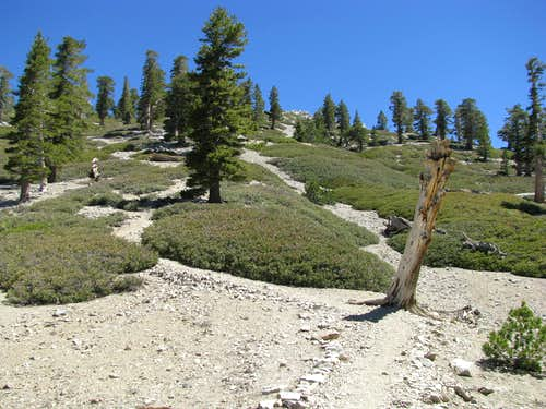 homestretch on the Baldy Bowl Trail
