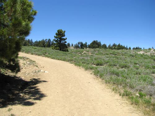 Dirt Road on Pinos