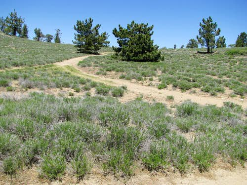 road to Pinos summit