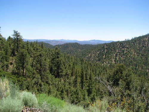 Driving down Mt. Pinos Rd