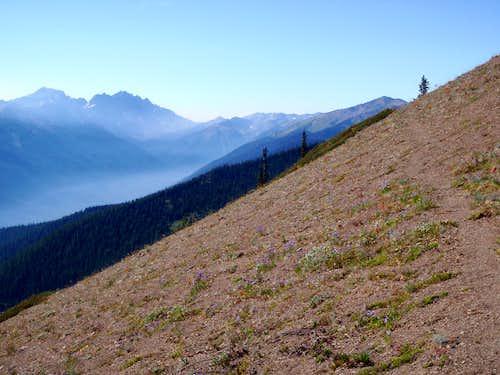 Northern Gray Wolf Ridge