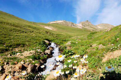 Wildflowers by a stream