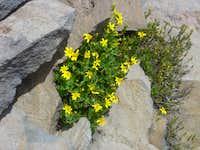 Mt Adams Flora