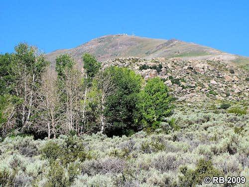 Ellen D Mountain