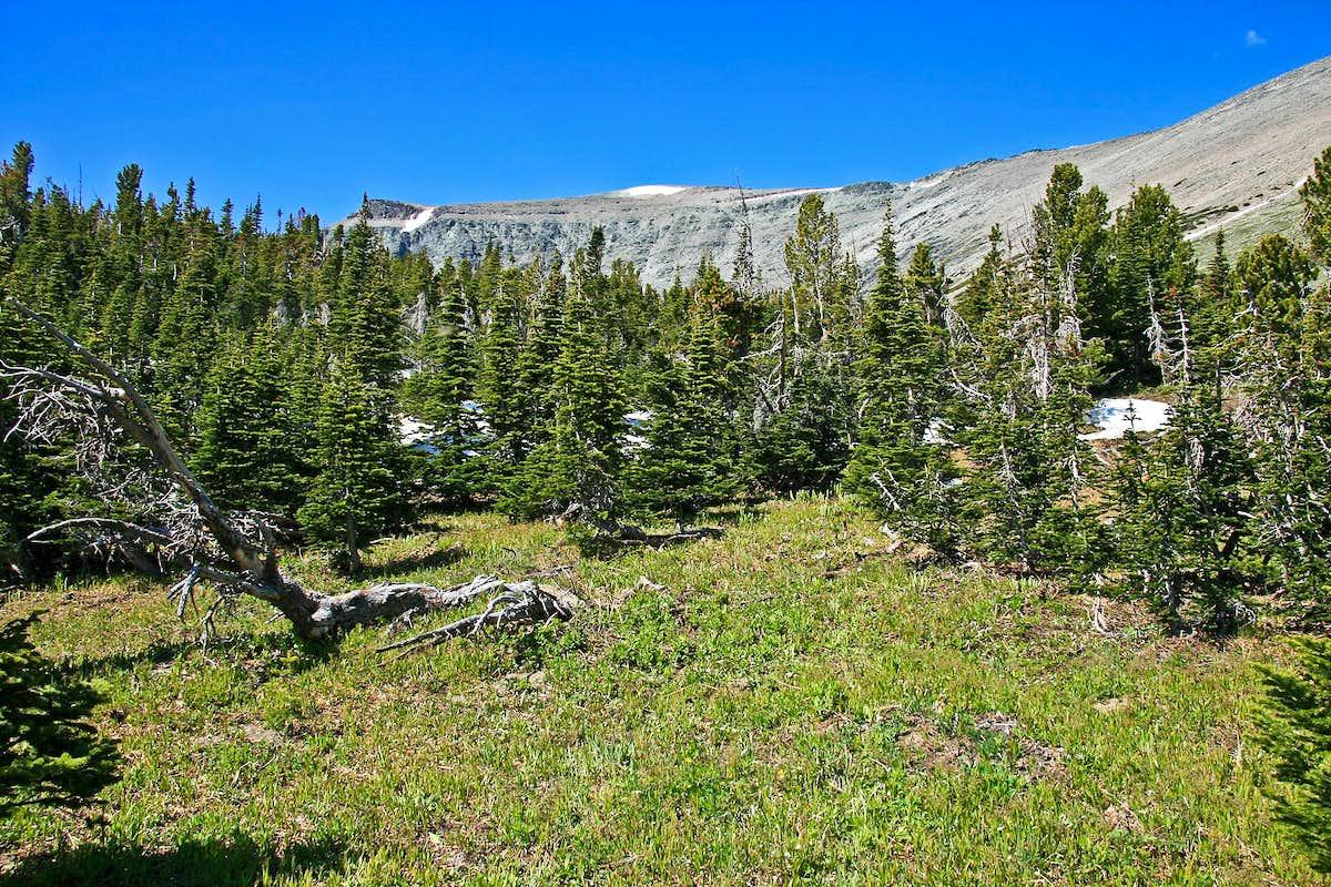Open forest...mountain... : Photos, Diagrams & Topos ...
