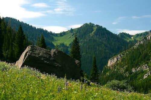 Meadow Boulder