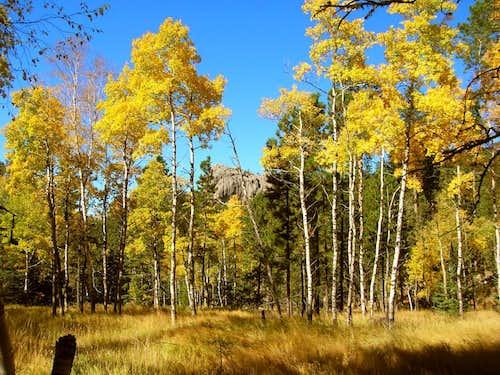 Fall View Along Trail 4