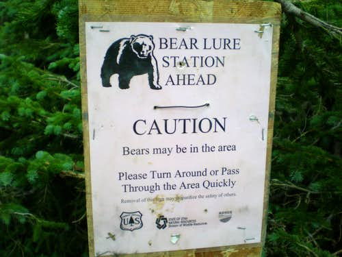 Bear Lure Station