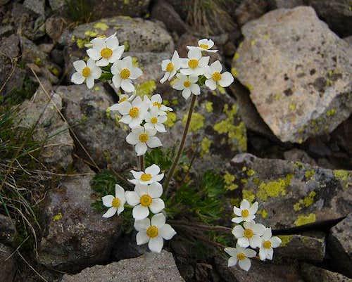 Wildflowers on East Ridge