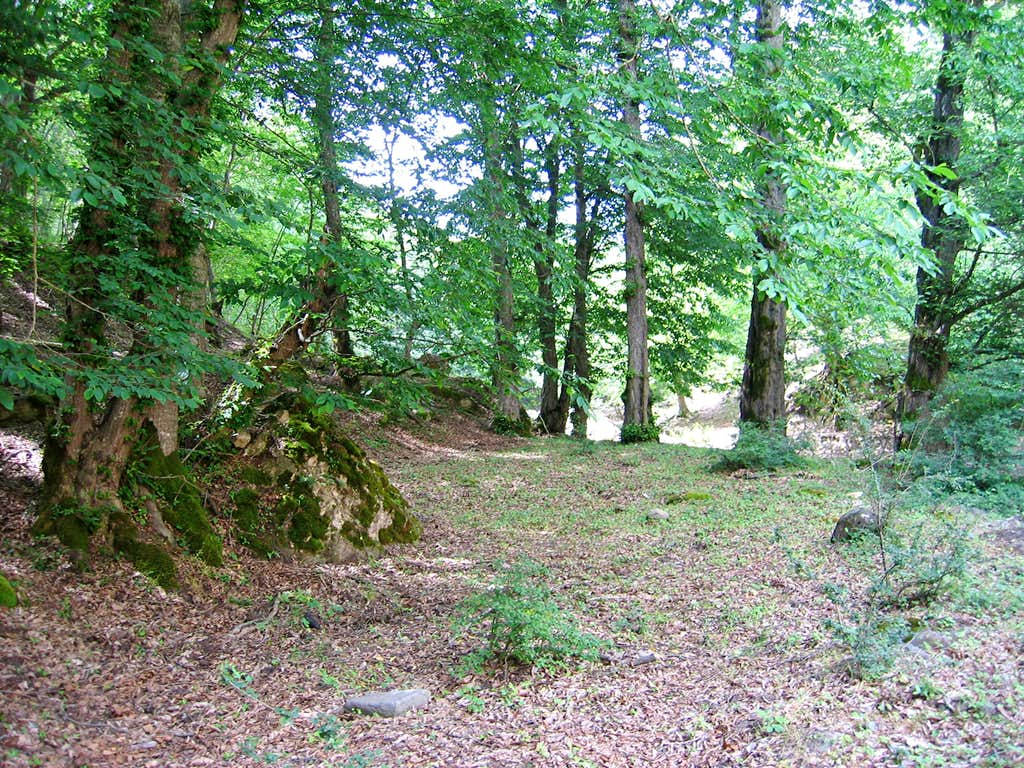 Entering Upper Forest