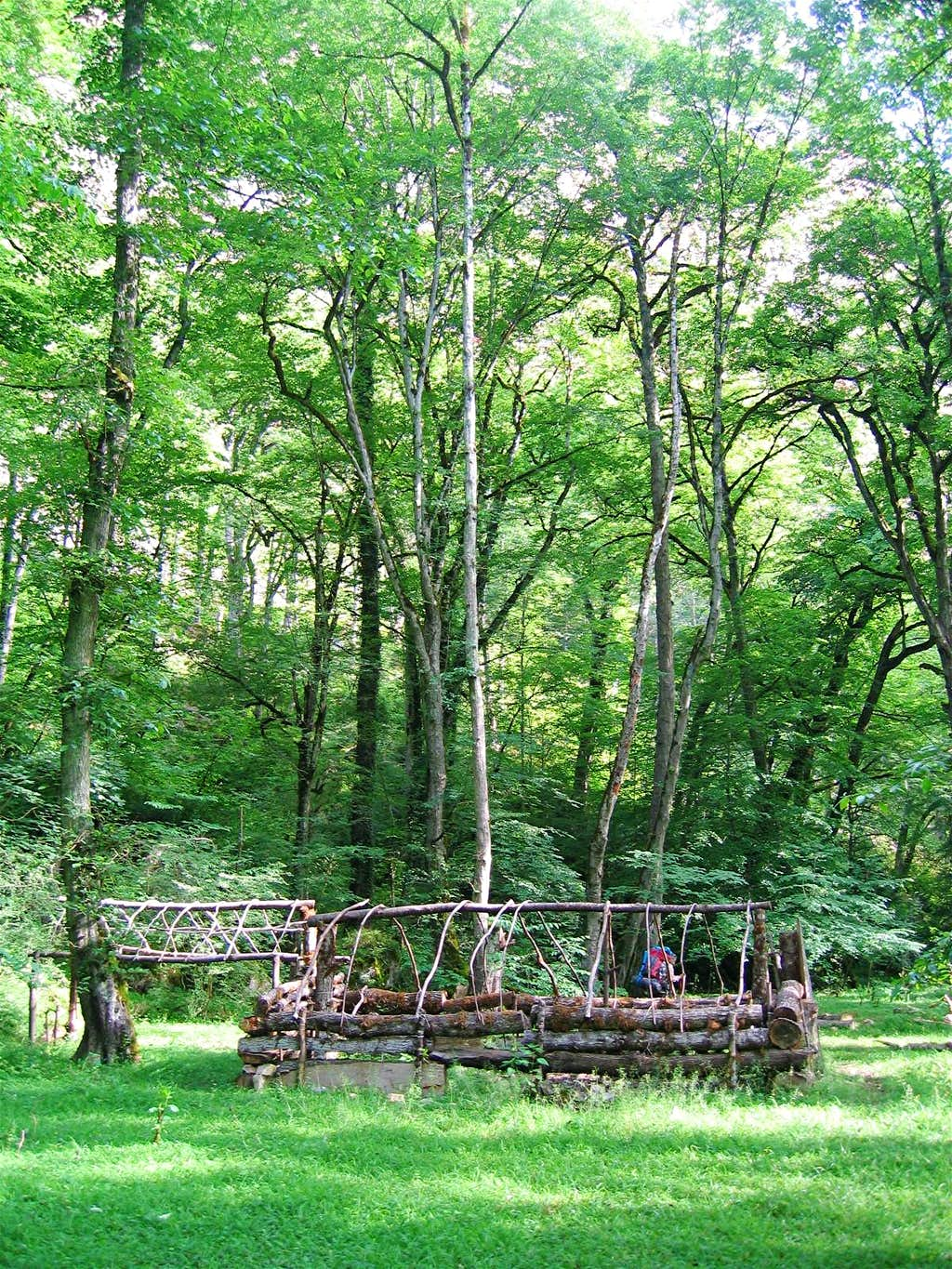 Structure in the Meadow