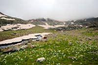 Wildflowers in the Artabel basin