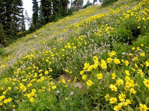 Flowers by Red Pine Lake