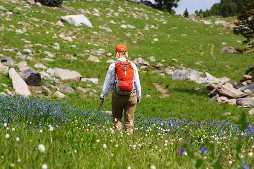 Hiking through Wildflowers - Beartooth High Lakes
