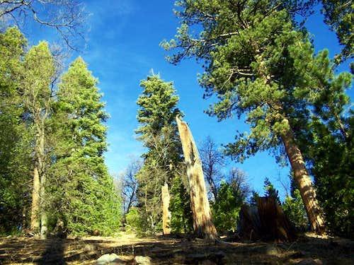 Bohna Peak 11-29-2008
