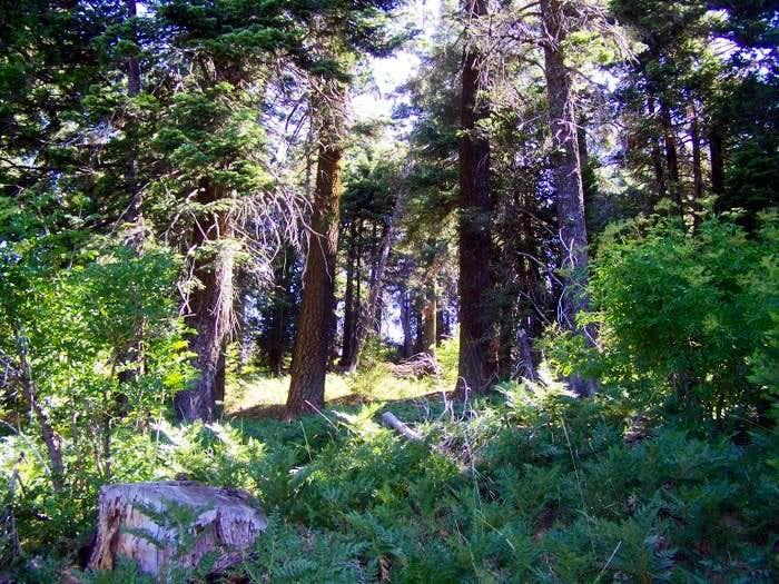 Shirley Peak 08-09-2009