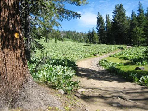 Corral Gulch Meadow