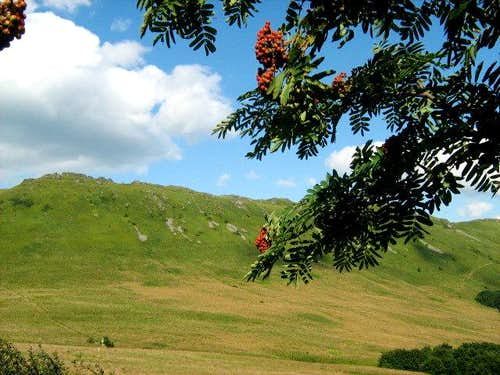 Mountain Ash and Mount Krzemien (1335 m)