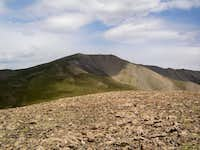 Silverheels from the south