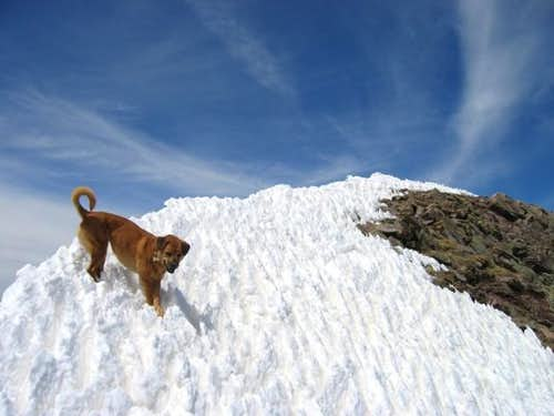 My dog Sopris on the summit...