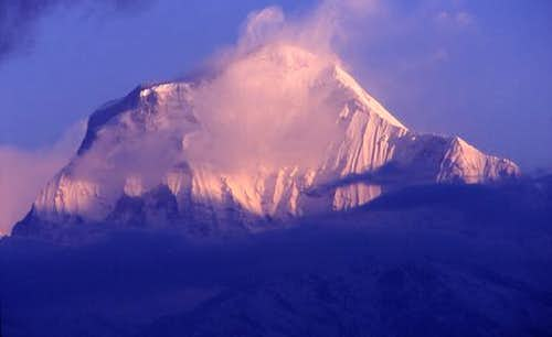 Dhaulagiri in the morning...